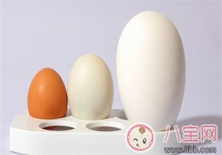 怀孕怎么吃鹅蛋    怀孕吃鹅蛋有哪些好处