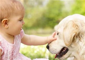 宝宝被各种宠物抓咬伤的紧急处理措施