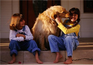 宠物攻击性测试方法 宝宝被宠物咬伤的正确处理